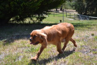 shazzoom-banksia-park-puppies-22-of-22