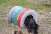 banksia-park-puppies-jacinta-wooster-ella-swoosh-19-of-51