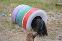banksia-park-puppies-jacinta-wooster-ella-swoosh-20-of-51