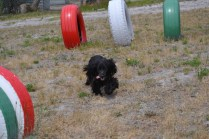 banksia-park-puppies-jacinta-wooster-ella-swoosh-27-of-51