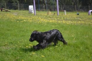 banksia-park-puppies-swish-11-of-34