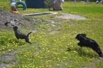 banksia-park-puppies-swish-13-of-34