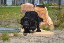banksia-park-puppies-swish-17-of-34