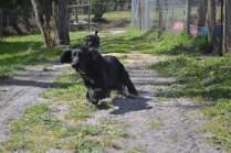 banksia-park-puppies-swish-2-of-34