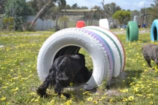 banksia-park-puppies-swish-21-of-34