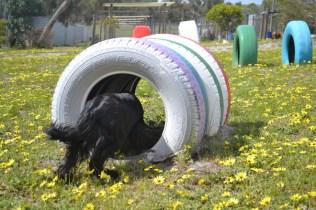 banksia-park-puppies-swish-22-of-34