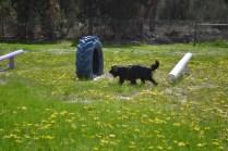 banksia-park-puppies-swish-27-of-34