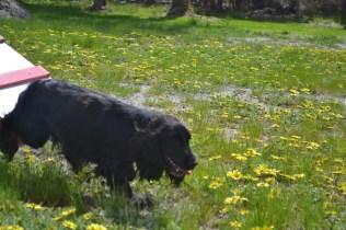 banksia-park-puppies-swish-32-of-34