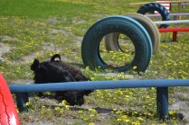 banksia-park-puppies-swish-7-of-34