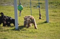 Banksia Park Puppies Swoosh - 12 of 37