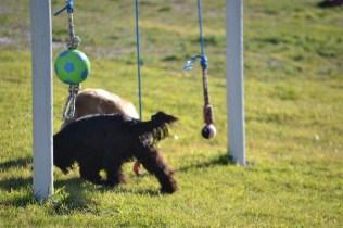 Banksia Park Puppies Swoosh - 14 of 37