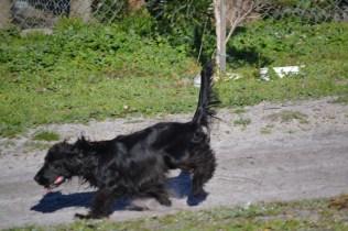 Banksia Park Puppies Swoosh - 15 of 37