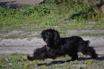 Banksia Park Puppies Swoosh - 16 of 37