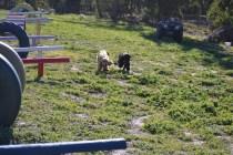Banksia Park Puppies Swoosh - 5 of 37