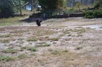 Banksia Park Puppies Swoosh - 2 of 8