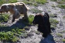 Banksia Park Puppies Swoosh - 9 of 37