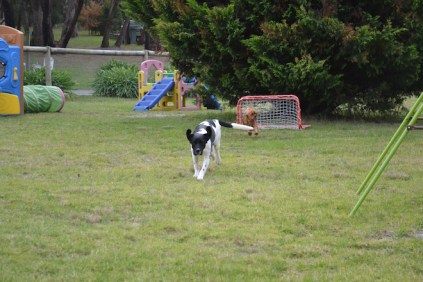 Banksia Park Puppies Lotto Sherry - 9 of 22
