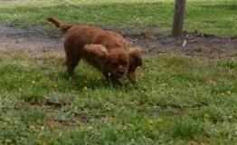 banksia-park-puppies-pavati-15-of-35