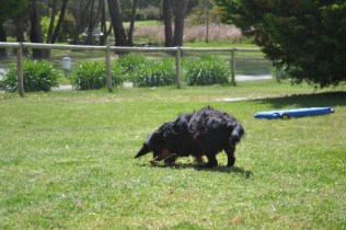 banksia-park-puppies-pruefull-6-of-36