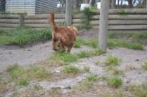 banksia-park-puppies-roz-2-of-8