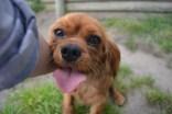 banksia-park-puppies-roz-8-of-8