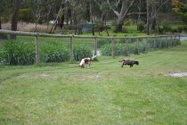 banksia-park-puppies-fire-27-of-29