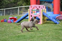 banksia-park-puppies-fire-29-of-29