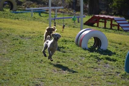 Banksia Park Puppies Oops - 2 of 54
