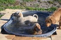 Banksia Park Puppies Oops - 26 of 54