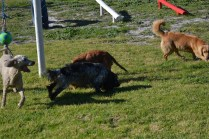 Banksia Park Puppies Oops - 28 of 54