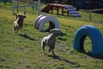 Banksia Park Puppies Oops - 5 of 54