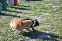 Banksia Park Puppies Oops - 8 of 54
