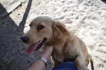 Banksia Park Puppies Ooshka - 18 of 31