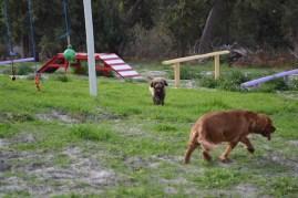 Banksia Park Puppies Cosmic - 3 of 9