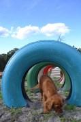 Banksia Park Puppies Cosmic - 8 of 9