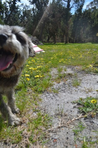 banksia-park-puppies-loopy-6-of-15