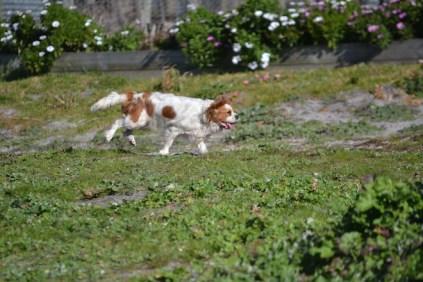Banksia Park Puppies Ravi - 1 of 39