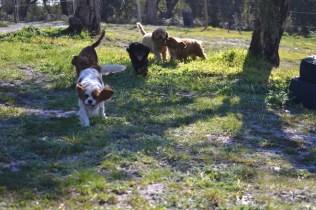 Banksia Park Puppies Ravi - 22 of 39