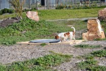 Banksia Park Puppies Ravi - 5 of 39