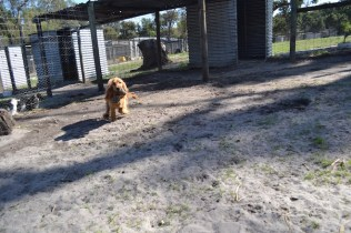 Banksia Park Puppies Saffi Ray - 14 of 44