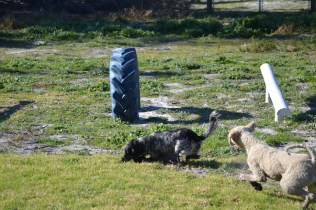 Banksia Park Puppies Shorty - 13 of 36