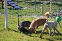 Banksia Park Puppies Shorty - 16 of 36