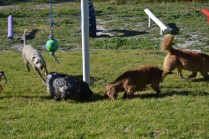 Banksia Park Puppies Shorty - 22 of 36