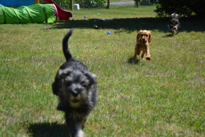 Lolly Loopy Lulu Lila Shorty Safa