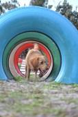 Banksia Park Puppies Agility