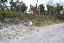 banksia-park-puppies-bluberri-12-of-14