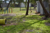 banksia-park-puppies-shayla-32-of-41