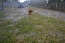 banksia-park-puppies-shiela-2-of-13