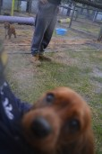 banksia-park-puppies-shiela-5-of-13