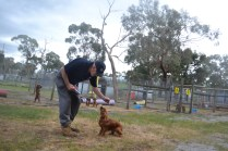 banksia-park-puppies-shona-17-of-21